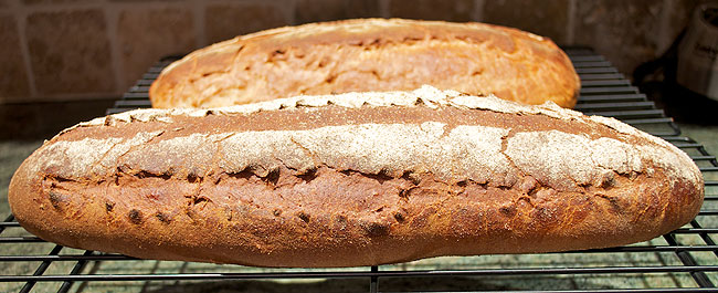 Honey Wheat Bread cooling