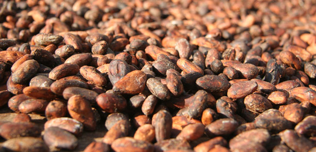 Cocoa Beans, 2003 Fair-trade Foundation